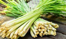 Công dụng của sả trong ẩm thực, dược liệu, sản xuất tinh dầu